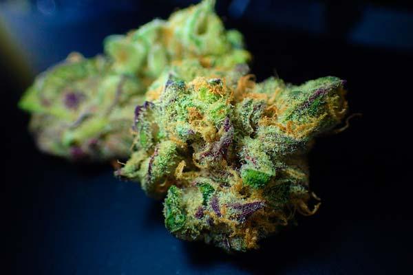 Cannabis Blüte zur Gewinnung von CBD