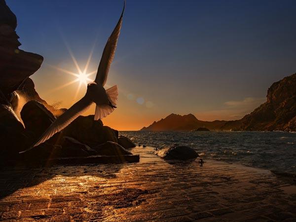 Vogel in der Luft als Sinnbild für die Befreiung von CBD