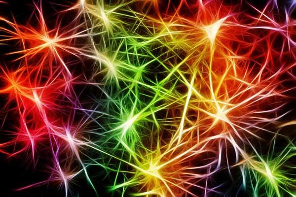 Cannabinoide interagieren mit dem körpereigenen Endocannabinoidsystem