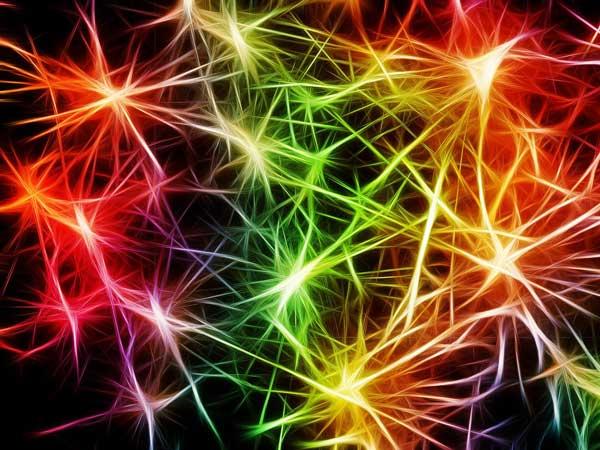 Cannabidnoide wirken auf das Endocannabinoidsystem