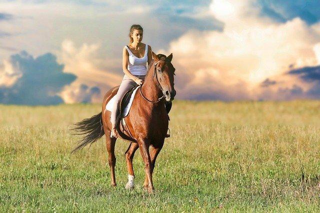 CBD Wirkungsweisen bei Pferden