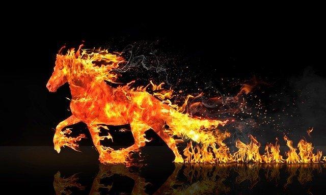 CBD wirkt entzündungshemmend bei Pferden