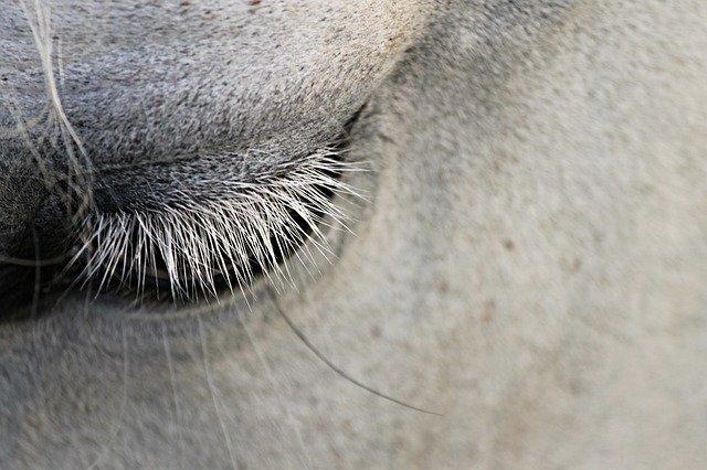 CBD lindert Schmerzen von Pferden