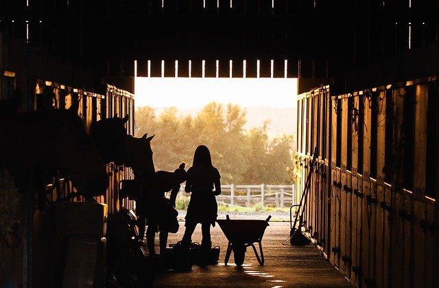 CBD wirkt beruhigend auf Pferde